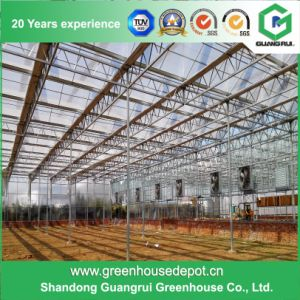 Polycarbonate Sheet/Plastic/Glass Green Houses for Vegetables/Garden pictures & photos
