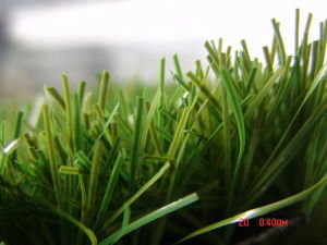 Artificial Turf for Golf