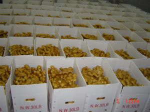 Good Quality Fresh Ginger New Crop (50g and up) pictures & photos