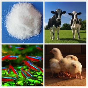 Tryptophan /Factory Supply/ Feed Grade Amino Acids (CAS: 73-22-3)