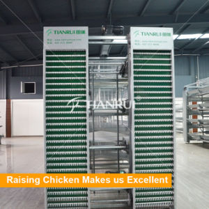 H Type Automatic Poultry Cages 5 Tiers Layer cage pictures & photos