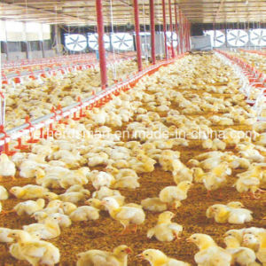 Low Cost Prefabricated Steel Structure Poultry House Building pictures & photos