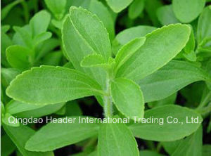 Natural Sweetner/ High Quality/ Stevioside/ 90%/Stevia P. E pictures & photos