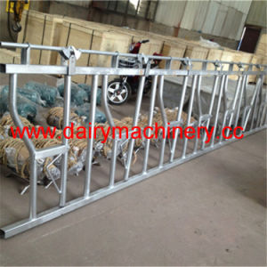Hot-Galvanized Steel Pipe Cow Headlock pictures & photos