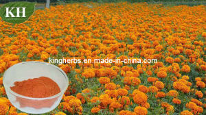 Lutein 5%, 10%, 20%, 80%, 90% Marigold Extract pictures & photos