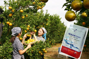 NPK Animal Source Soluble Organic Fertilizer Amino Acid pictures & photos