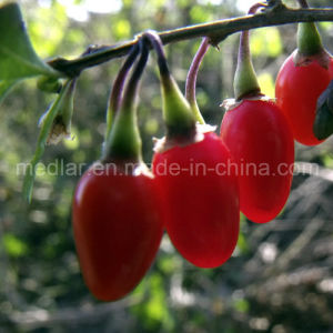 Medlar Nature Ningxia Wolfberry pictures & photos