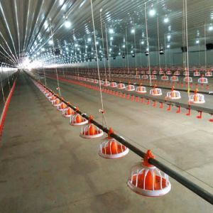 Automatic Equipment in Livestock for Broiler Layer and Breeder pictures & photos