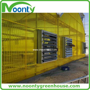Polycarbonate Sheet Greenhouse with Plastic Film on Top for Middle East pictures & photos