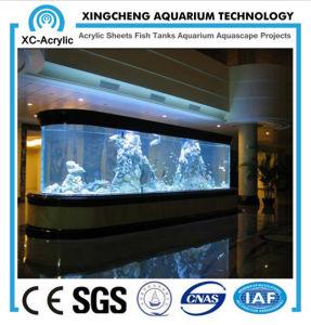 Square Acrylic Aquarium pictures & photos