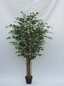 High Quality of Artificial Plants Ficus Tree Gu-Mx-Mini-Ficus-180cm pictures & photos