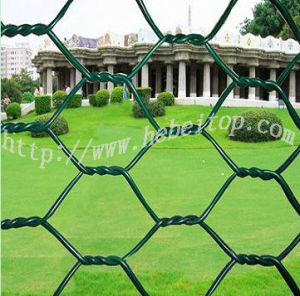 PVC Coated Hexagonal Wire Mesh (1′′*BWG22)