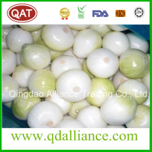 Fresh Peeled Purple White Onion with vacuum Packing pictures & photos