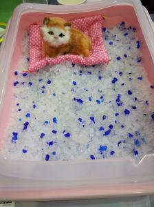 Unscent Cat Litter Cat Sand/ Block-Shape Silica Gel Cat Sand /Economic Package Bag for Cat Litter pictures & photos