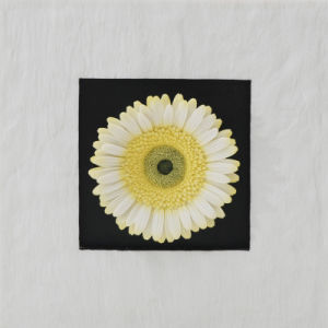 Resin Sandstone Yellow Gerbera Flowers Wall-Mounted Decoration for Home Decoration or Hotel Decoration