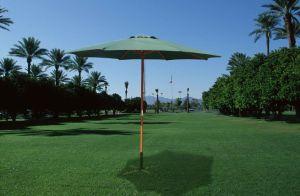 Wood Umbrella pictures & photos