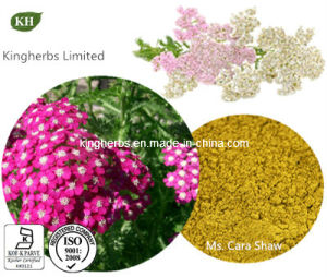 Achillea Millefolium Extract 10: 1 pictures & photos