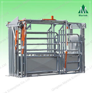 Galvanized Powder Coated Cattle Weighing Scale on Sale pictures & photos
