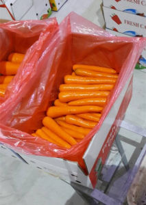 2016 Fresh Carrots for Dubai Market pictures & photos