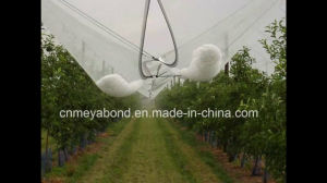 Italy Market Anti Hail Nets 2.8X100m in Vineyard pictures & photos