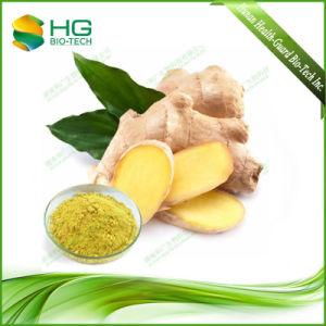 5%-20% Gingerols Natural Ginger Powder Extract