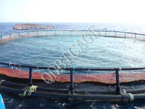 Deep Water Aquaculture Cage /Fishing Cage with SGS pictures & photos