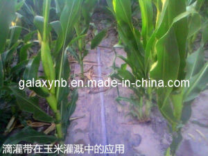 Patch Type Drip Irrigation Belt Under Corn Membrane pictures & photos