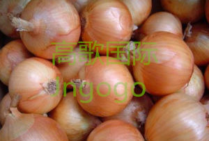 Export Fresh Vegetable Good Quality Yellow Onion pictures & photos
