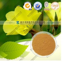 Siberian Ginseng Acanthopanax Senticosus Extract pictures & photos