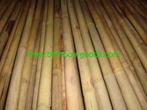Tonkin Bamboo Cane pictures & photos
