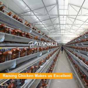 New Design Low Price a Type 4 Tiers Battery Layer Cages pictures & photos