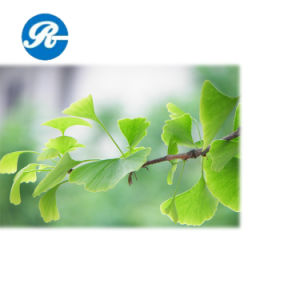 Care Health Products Raw Materials Ginkgo Biloba Extract pictures & photos