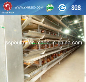 4, 5, 6 Tiers H Type Battery Farm Layer Cage pictures & photos