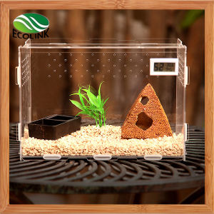 Transparent Acrylic Reptile Terrarium Only Habitat for Small Arboreal Tarantulas Chameleon Snails or Other Larval Reptiles pictures & photos