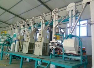 30t Per Day Corn Processing Equipment FTA100 pictures & photos