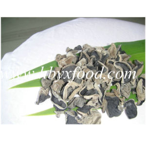 1.5-2cm Dehydrated Tasty White Back Fungus pictures & photos