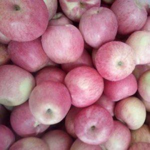 Golden Supplier of Fresh Red Qinguan Apple pictures & photos