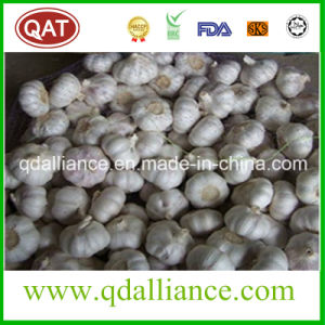 None GMO Normal White Garlic with ISO9001 Certificate pictures & photos