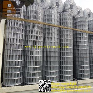 High Quality Hot-Dipped Galvanized Welded Wire Mesh pictures & photos