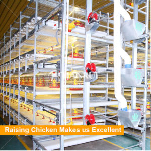 H Type Broiler Raising Equipment pictures & photos