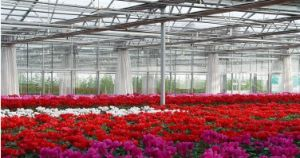 High Quality Cheap Polycarbonate Sheet Greenhouses pictures & photos