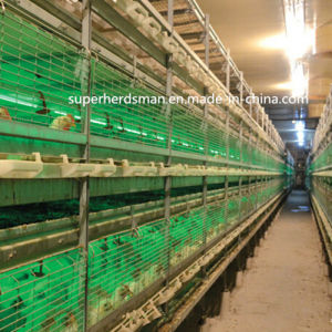 Good Quality Poultry Cage Feeding Equipment pictures & photos