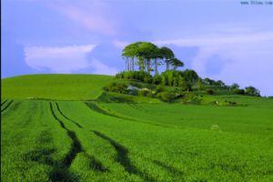 EDDHA-Fe Organic Fertilizer pictures & photos