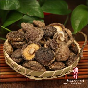 Dried Mushroom (Coin Size) pictures & photos