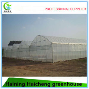 Newly High Tech Mushroom Greenhouse for Tropical Area pictures & photos