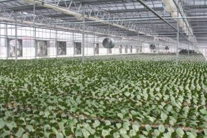 Factory Directly Sale Greenhouse Poultry Farm Workshop Exhaust Fan pictures & photos
