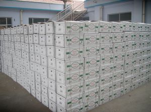 2017 New Crop Fresh Vegetable White Garlic with Carton Packing pictures & photos