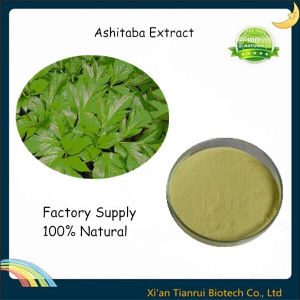 Angelica Keiskei Leaf Extract Powder Ashitaba Extract pictures & photos
