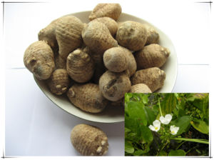 Factory Natural Rhizoma Alismatis/ Alisma Plantago-Aquatica 10: 1 Extract Powder pictures & photos
