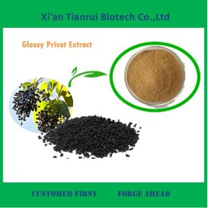 Natural Glossy Privet Fruit Extract for Sale pictures & photos